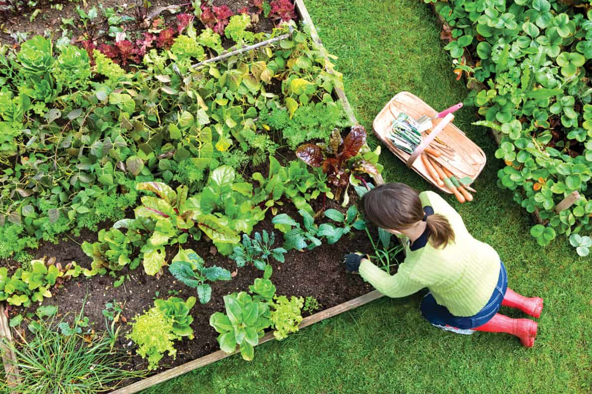 Vegetable Gardening For The Beginner Kristina Wolf Design